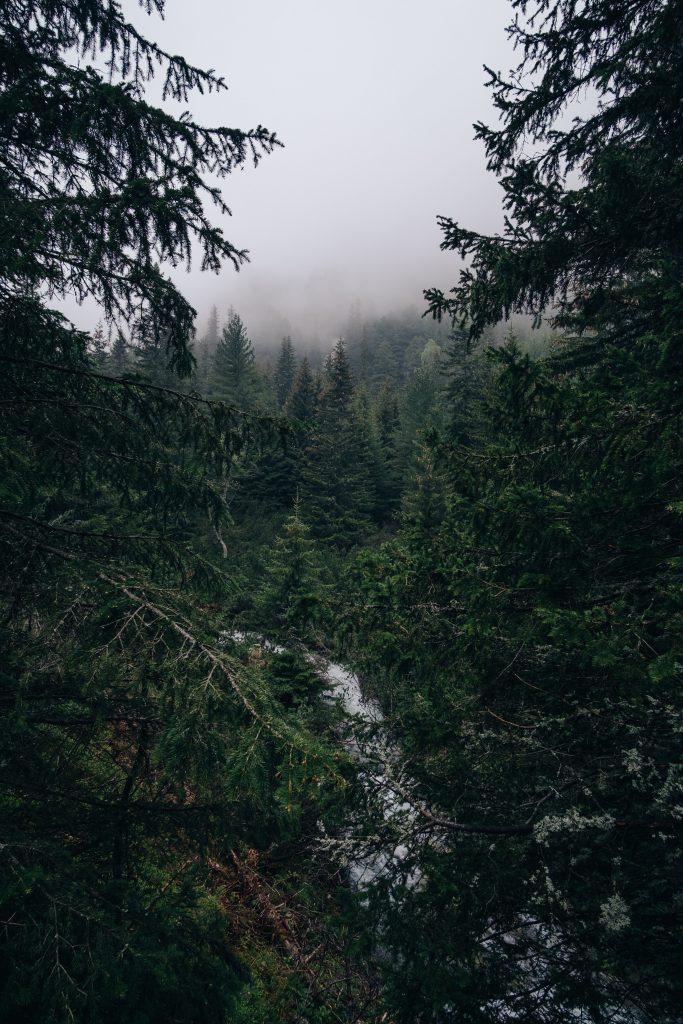 Горите на България