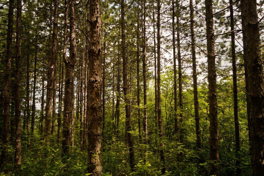В гората по екопътека Устина
