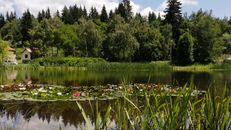 Водни лилии и черни лебеди – Езерото в Панагюрски колонии