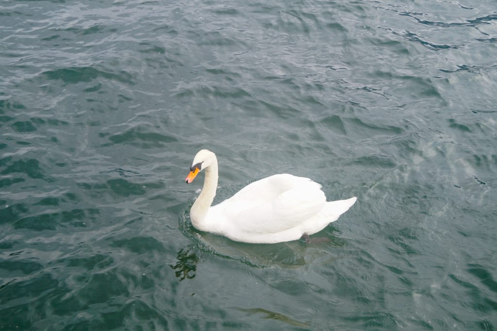 Обитателите на езерото Халщат