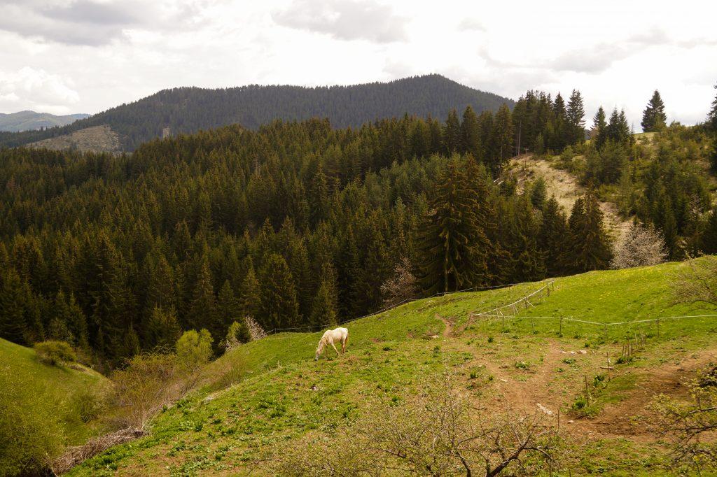 Село Гела – Енергиен център в сърцето на Родопите